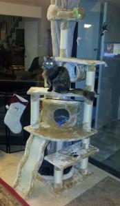 kitty climber